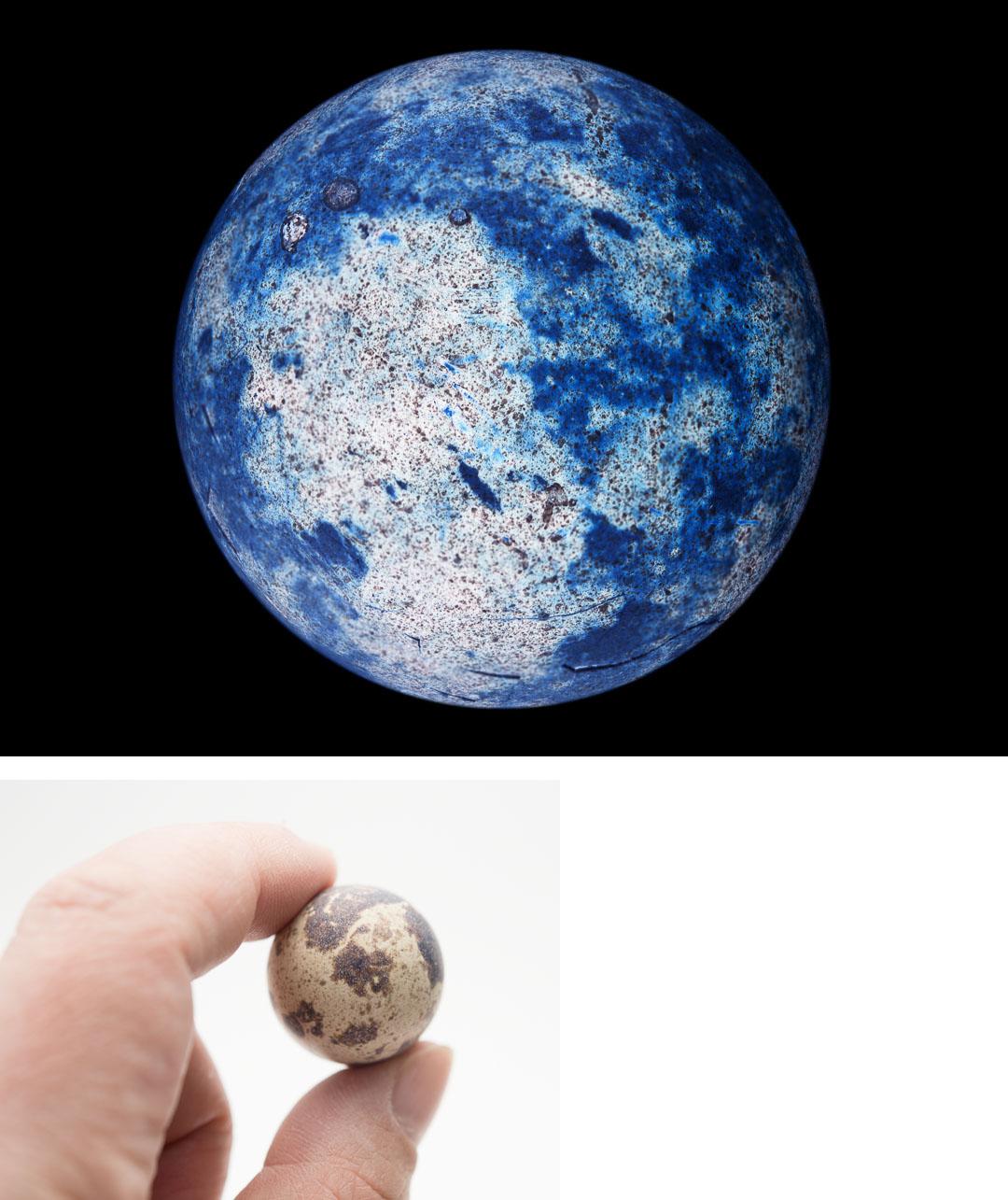 Quail's Planet